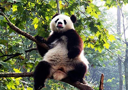 LIWEIXKY Beautiful View Puzzle Puzzle de 1000 Piezas para Adultos Juego de descompresión Duro y Divertido: Panda trepando a un árbol