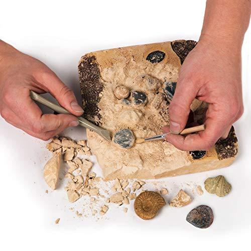 National Geographic Kit de yacimiento de fósiles Reales, 15 fósiles