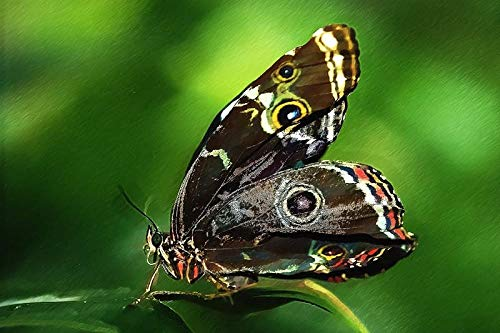 XXMT Puzzles Jigsaw Puzzles 1000Pcs Closeup Photo of Blue Morpho Butterfly Perching On Leaf Best Gift