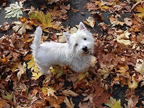 XYIDAI Rompecabezas de Rompecabezas for Adultos, 500 Pieza del Rompecabezas de Madera de West Highland White Terrier for Adolescentes y Adultos, Muy Buen Juego Educativo